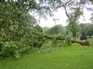 Mpls Storm 11