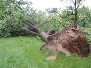 Mpls Storm 13
