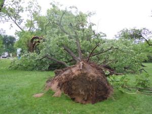 Mpls Storm 14
