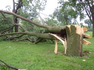 Mpls Storm 17