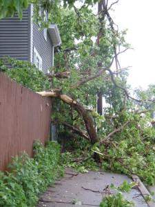Mpls Storm 39
