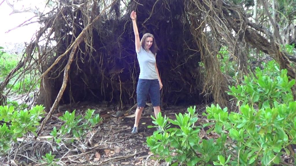 Hawaii Dance 025 - Tipped Over Tree near Ahalanui Warm Spring